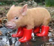 Get me out of these wellies...