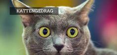 [Vraag aan de gedragsdeskundige] Moederpoes gromt naar kittens