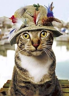 1000 images about cats wearing hats on pinterest cats for Cat fishing 2