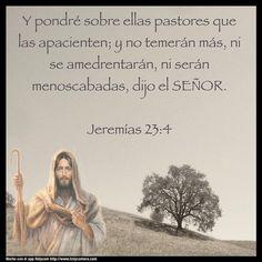 Y pondré sobre ellas pastores que las apacíenten; y no temerán más, ní se amedrentarán, ní serán menoscabadas, dijo el Señor. Jeremías 23:4 #holycam