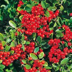 Kletterpflanze Halbschattig großer garten wasserdost im 20 liter topf heilpflanze purpur rot