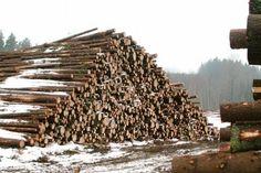 Kirjoittajan mukaan puun pystykaupan lopettaminen palauttaisi metsänomistajat yrittäjiksi. Kuvassa kuitupuupino Ikaalisissa.
