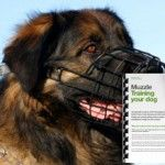 Teach your dog to safely wear a muzzle with behaviourist and dog trainer Karen Wild