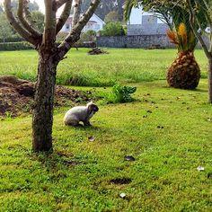Pompón pensativo. #rabbit