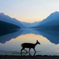 Bowman Lake, Glacier National Park: Photo bt Kevin LeFevre