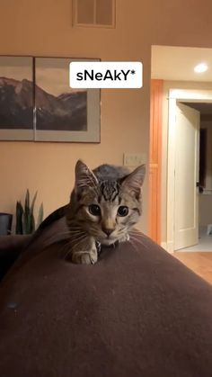 Funny Animal Videos, Funny Animal Jokes, Cute Funny Animals, Animal Memes, Funny Cute, Cute Baby Cats, Cute Little Animals, Cute Cats And Kittens, I Love Cats