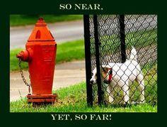 Funny dog pic. So near, yet so far.