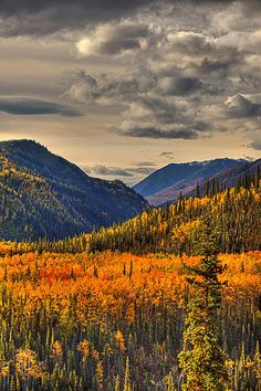 ~~Autumn At Riley Creek Denali National Park, Alaska by Lloyd Nielsen~~