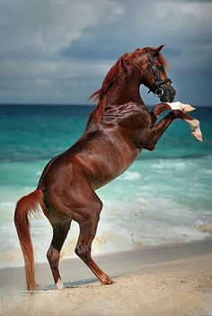 Horse, beautiful, brown beauty, Ocean view, gorgeous