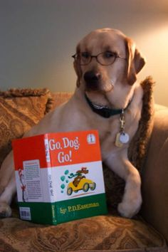 Idea 18-Read to your pet, stuffed animal or doll.  Picture of a dog with eye glasses and reading a children's book.