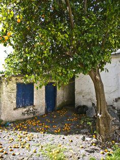 Orange Tree in Chania - Crete, Greece Cool Places To Visit, Places To Travel, Places To Go, Travel Destinations, Crete Island, Greece Islands, Site Archéologique, Athens Greece, Mykonos Greece