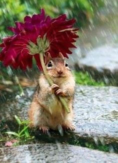 """Shared from INature's photos of animals covering themselves from the rain"""". How smart and cute of this adorable squirrel! Cute Creatures, Beautiful Creatures, Animals Beautiful, Animals Amazing, Cute Baby Animals, Animals And Pets, Funny Animals, Wild Animals, Animal Pictures"""