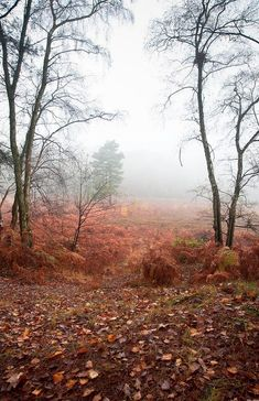 Foggy misty Autumn forest landscape at dawn by Matthew Gibson Misty Forest, Autumn Forest, Autumn Fall, Forest Landscape, Landscape Design, Landscape Photography, Nature Photography, October Country, Big Leaves