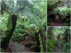 USING PUBLIC TRANSPORT - Walking/Hiking in the Dandenong Ranges, Clematis Track, Sherbrooke