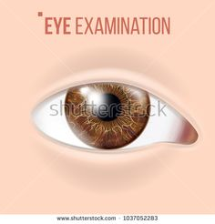 Human Eye Vector. Visual Examination. Body Check. Realistic Anatomy Illustration