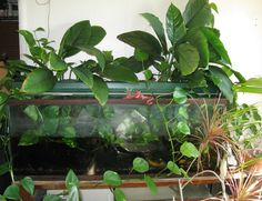 Use the houseplants to filter the aquarium! Best of both worlds, Joel. The fish fertilize the plants, the plant roots filter the water.