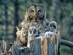 Wildlife Photography: How To Capture Animals in Love | Wedding ...
