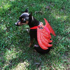 Little Devil - Best Dog Costumes, Tumblr Girls, Devil, Cute Pictures, Halloween, Instagram, Dog Costumes, Diy Dog, Pictures