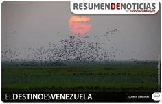#Turismo | El destino es #Venezuela | Llanos de #Barinas