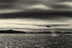 fotografo-passa-25-anos-documentando-a-beleza-majestosa-de-baleias-e-golfinhos-8.jpg (700×467)