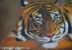 Pastel drawing - tiger with soft pastel - with Video! - Art365