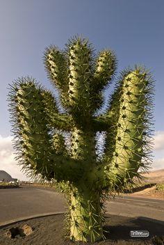 Metal Cactus outside the Cactus Garden, Lanzarote