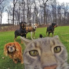 'Stand still, guys!'
