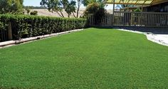 Want to get that artificial lawn but not sure about the expense? A cost comparison of artificial lawn vs natural lawn may help with your decision.