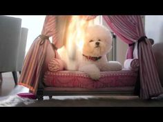 Sabrina Carpenter Rap | Adventures in Babysitting | Disney Channel - YouTube