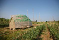 The Bottle Seedling House (made of bamboo and plastic bottles) provides farmers with relief from typhoons.