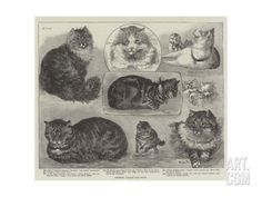 Crystal Palace Cat Show Giclee Print