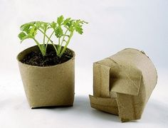 Seed starting in toilet paper rolls! I knew there was a good reason I save toilet paper rolls! Container Gardening, Gardening Tips, Organic Gardening, Organic Farming, Vegetable Gardening, Gardening Quotes, Vegetable Planters, Hydroponic Gardening, Starting Seeds Indoors