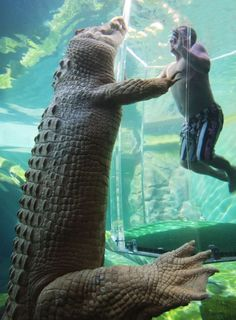 Crocodile cage diving in Darwin Australia. Of course Australia would do this, I'm in!