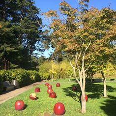 """""""Apples"""", Gustav Kraitz (2005), glazed ceramic, De Young Museum, Golden Gate Park."""
