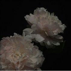 black aesthetic flowers grunge dark shadows night korean kawaii cute g e o r g i a n a : a e s t h e t i c s flowers overlay g e o r g i a n a Night Aesthetic, Flower Aesthetic, White Aesthetic, Aesthetic Grunge, Aesthetic Photo, Aesthetic Pictures, Dark Paradise, Dark Instagram, Art Sombre