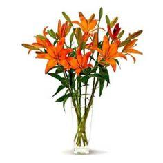 Lovely Orange Lilies