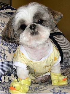 cute ducky slippers!:)