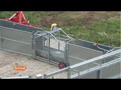 Sheep and Pig Handling - Jimmys Farm Future Farms, Sheep, Youtube, Channel, Yard, Animals, Sheds, Animales, Animaux