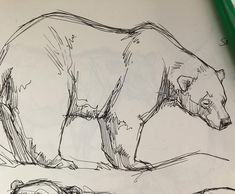 Polar bear #polarbear #bear #animaldrawing #zoosketching #animalsketch #animalart