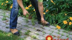 Stop buying weed killers or weeding by hand! How to get a weed-free brick driveway (or patio) that stays that way. A DIY weed prevention method that lasts - and is non-toxic. Brick Paving, Concrete Bricks, Paving Stones, Planting Succulents, Planting Flowers, Polymeric Sand, How To Install Pavers, Rhododendron, Easy Care Plants