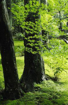 Summer leaves in Nikko, Japan