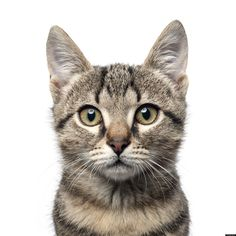 Your pet cat may not be as cute and cuddly as you might think. According to a new study published Tuesday in the journal Nature Communications, domestic cats kill billions of birds, mice and small animals in the U.S. each year.  Biologists estimate...