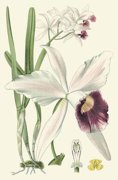Delicate Orchid II Giclee Print Poster by Vision Studio Online On Sale at Wall Art Store – Posters-Print.com