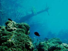 Shipwreck in Palmyra Atoll