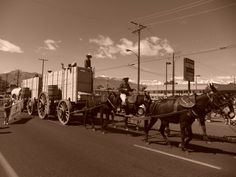 A snapshot of Mule Days in Bishop,CA( one of the largest non-motorized parades in the country)