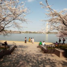 Cherry blossoms are at peak bloom this week in Washington DC. Here is the Tidal Basin, as viewed Saturday from the FDR Memorial.
