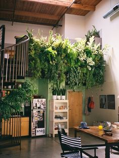 indoor gardens- Definitely not my real kitchen! I'd have this as my outdoor/indoor garden sink area haha! Indoor Garden, Home And Garden, Indoor Plants, Hanging Plants, Indoor Balcony, Inside Garden, Balcony Garden, Balcony Plants, Indoor Ivy