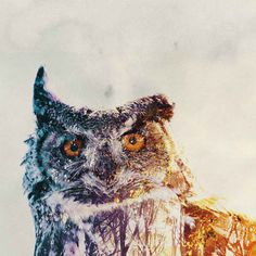 Amazing Double-Exposure Animal Portraits by Andreas Lie - BlazePress