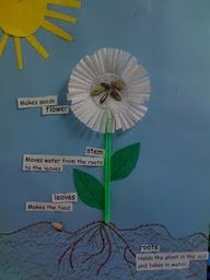I watched my third graders this morning make this cute diagram of a plant!