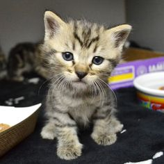 The Cutest of the Cute from Kitten Happy Hour